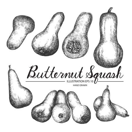 butternut squash: Set of butternut squash. Hand drawn collection by ink and pen sketch. Isolated outline vector elements can use for fruit and vegetable products and health care goods.