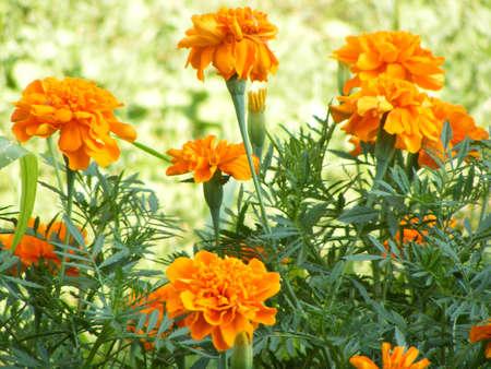 flowers in the summertime  Stock fotó