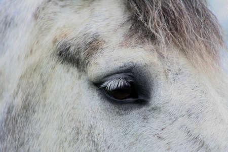 Close up of a horses face