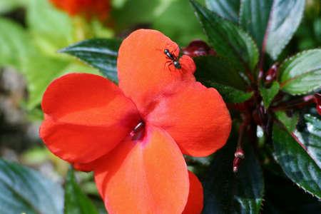 Ant fitosanitario Archivio Fotografico - 14765509