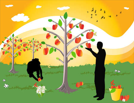 orchard fruit: farmes with apple tree