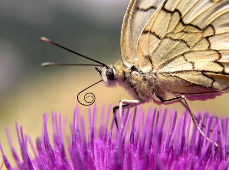 silken: This is silken butterfly on a pink flower.