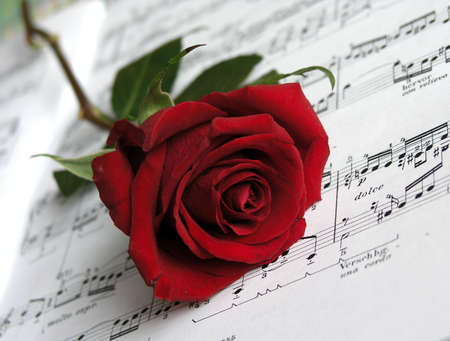 scores:          ...red rose on the scores .This is so .