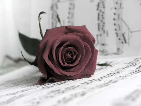 scores: ...red rose on the scores .This is so .Sepia tone
