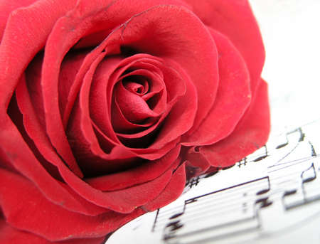 scores: ...red rose on the scores       Stock Photo