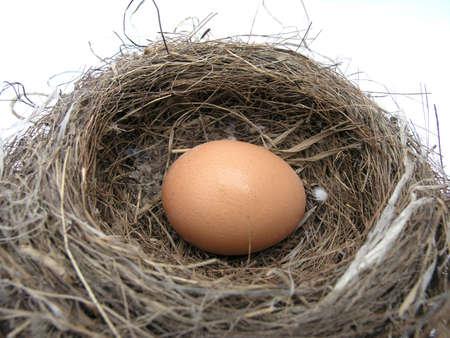 .. brown  egg in a birds nest.