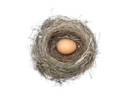 egg in a birds nest