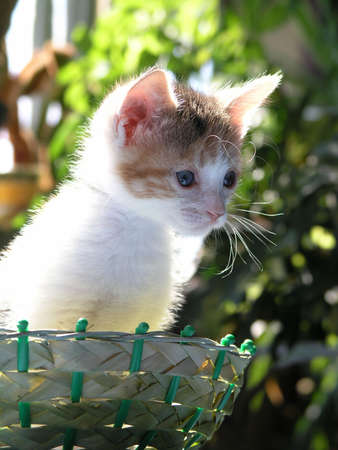 kitten sits in basket