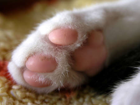 close up of sweet little pink kitten paw        Stock Photo