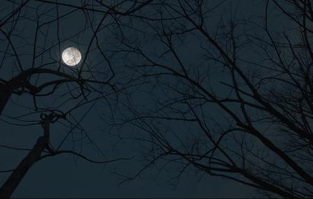 arboles secos: �rboles muertos Moonlight noche de Halloween Foto de archivo
