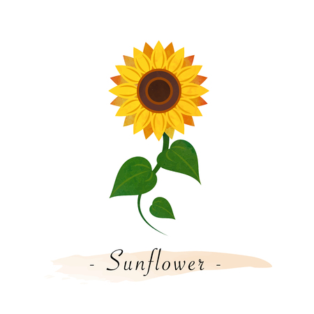 Colorful watercolor texture vector botanic garden flower sunflower Çizim