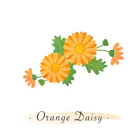 Colorful watercolor texture vector botanic garden flower asteraceae orange daisy