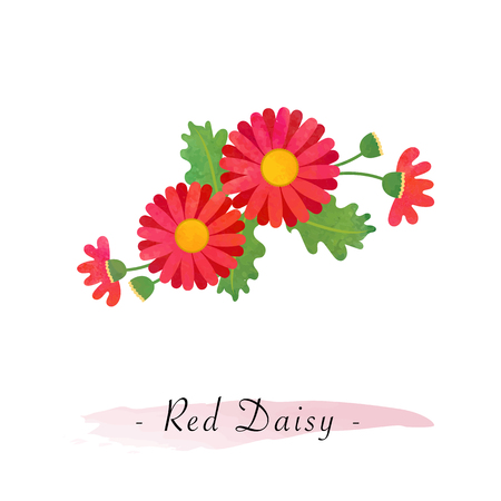 Colorful watercolor texture vector botanic garden flower asteraceae red daisy
