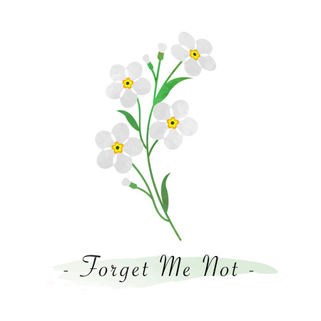forget me not: Colorful watercolor texture vector botanic garden flower white forget me not