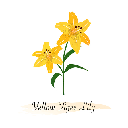 Colorful watercolor texture vector botanic garden flower yellow tiger lily Illustration