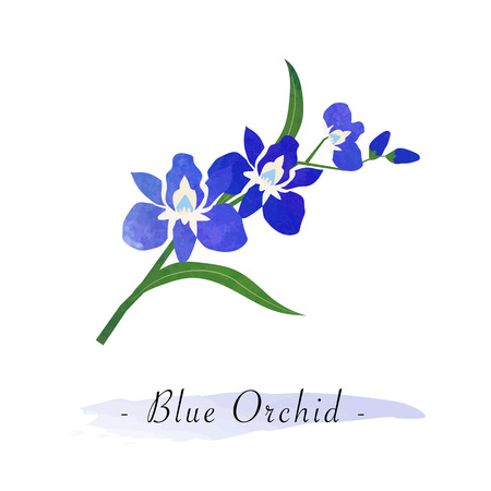 girlish: Colorful watercolor texture vector botanic garden flower blue orchid