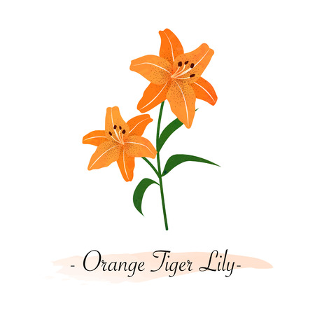 Colorful watercolor texture vector botanic garden flower orange tiger lily