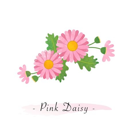 Colorful watercolor texture vector botanic garden flower asteraceae pink daisy