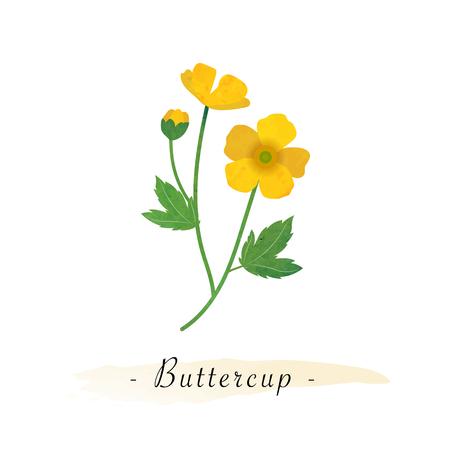 Colorful watercolor texture vector botanic garden flower buttercup