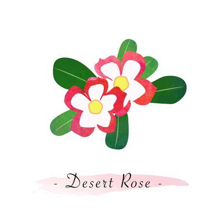 Colorful watercolor texture vector botanic garden flower desert rose impala lily Illustration