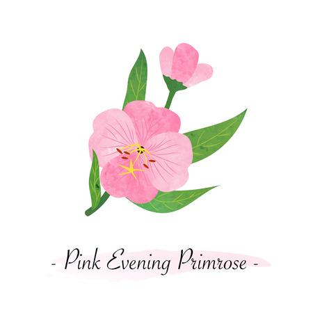 Colorful watercolor texture vector botanic garden flower pink evening primrose