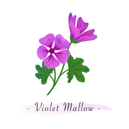Colorful watercolor texture botanic garden flower violet mallow