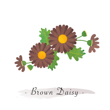 Colorful watercolor texture vector botanic garden flower asteraceae brown daisy