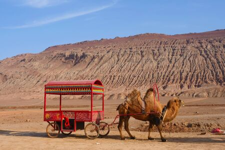 Nature landscape view of the Flaming Mountain and camel in Turpan Xinjiang Province China. 免版税图像