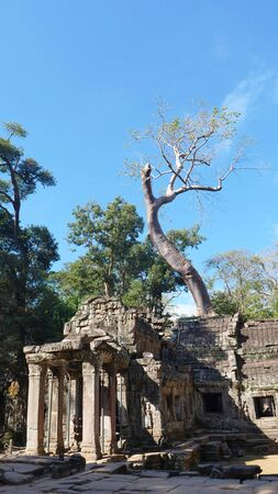 Landscape view of Ta Prohm Temple in Angkor wat complex, Siem Reap Cambodia. Stock fotó