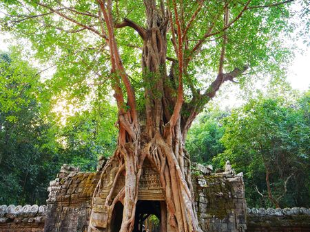 Ancient ruins of Ta Som temple in Angkor Wat complex, Siem Reap Cambodia. Stone temple door gate ruin with jungle tree aerial roots. Stock fotó