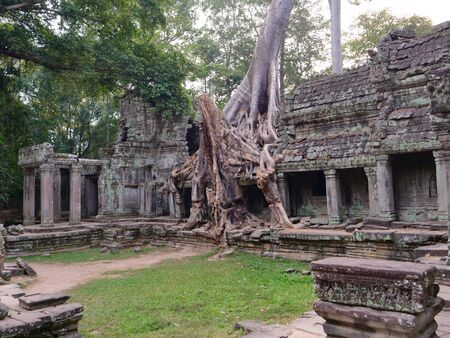 Landscape view of demolished stone architecture and aerial tree root at Preah Khan temple Angkor Wat complex, Siem Reap Cambodia. A popular tourist attraction nestled among rainforest.