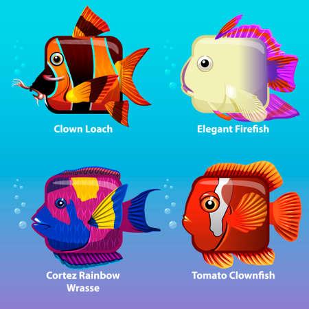 wrasse: stylized fish are square in vector, Clown Loach, Elegant Firefish, Cortez Rainbow Wrasse, Tomato Clownfish, Illustration