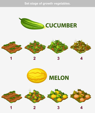 the sprouting: stage of growth vegetables. Cucumber and melon in vector for playing a perspective. game element
