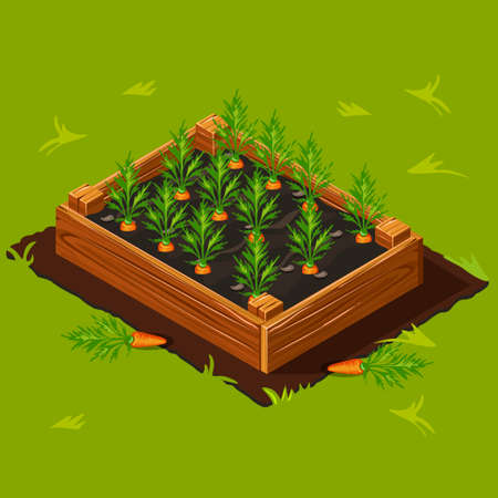 Vegetable Garden Wooden Box with Carrots.