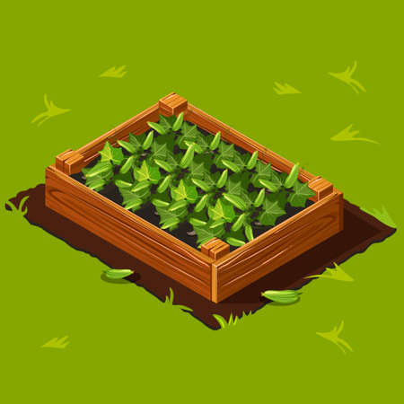cucumbers: Vegetable Garden Wooden Box with Cucumbers. Illustration