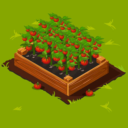 Vegetable Garden Wooden Box with Tomatoes.
