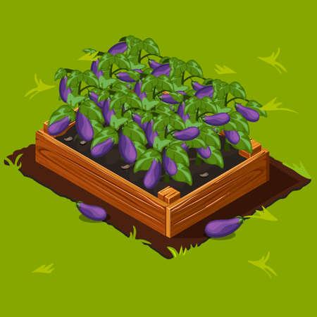 Vegetable Garden Wooden Box with Eggplant.