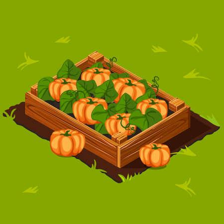 Gemüsegarten Holzkiste mit Kürbis.