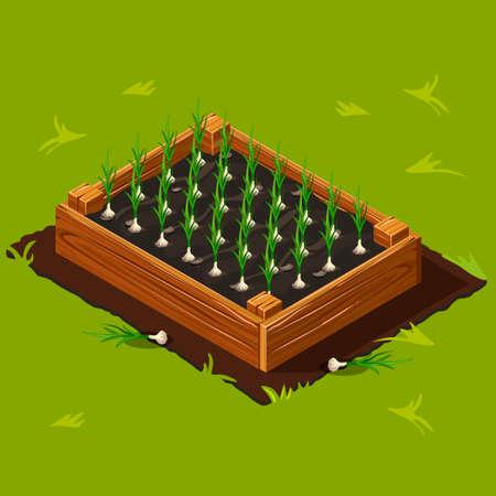 Vegetable Garden Wooden Box with Garlic