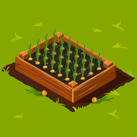 onions: Vegetable Garden Wooden Box with Onions