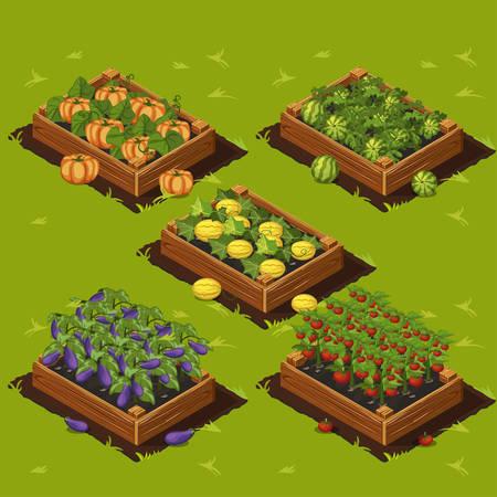 Gemüsegarten Holzkiste mit Wassermelonen, Melonen, Auberginen, Kürbis und Tomaten