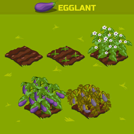 SET 2. Isometric Stage of growth vegetables. Eggplant in vector for playing a perspective. game element Illustration