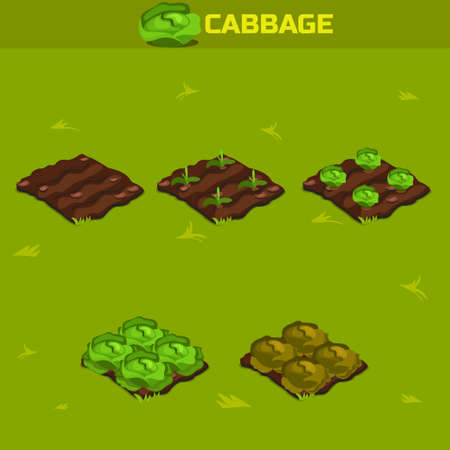 sapling: SET 12. Isometric Stage of growth vegetables. Cabbage in vector for playing a perspective. game element