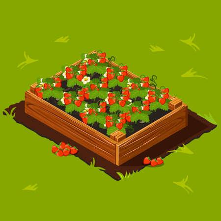 Berries Garden Wooden Box with Strawberry. Set 14 in vector