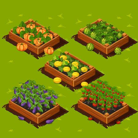 Jardin potager Boîte en bois avec la pastèque, le melon, l'aubergine, la citrouille et les tomates Vecteurs