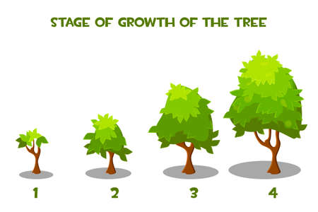 Vector illustration of cartoon tree growth stages.