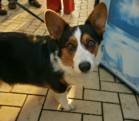 surprised dog: Surprised dog