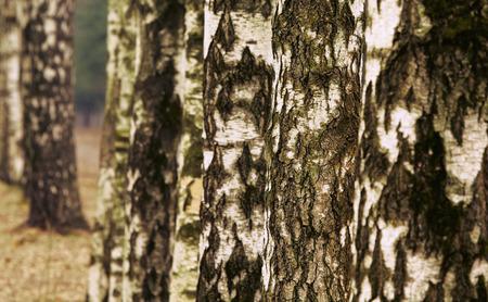 boles: Birch Alley