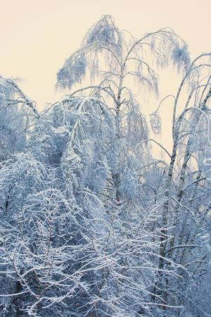 Winter, trees in the snow Banco de Imagens