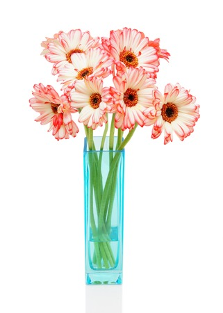 Pink gerbers in vase  on the white background photo